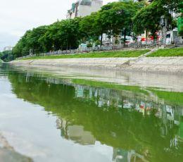 Cận cảnh dòng nước xanh ngắt hiếm thấy tại sông Tô Lịch, cá bơi 'nhộn nhịp' hàng đàn